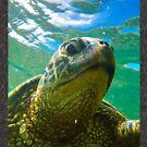 Hawaiian Green Sea Turtle by Kana Photography