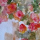 Apricot Roses by kest standley
