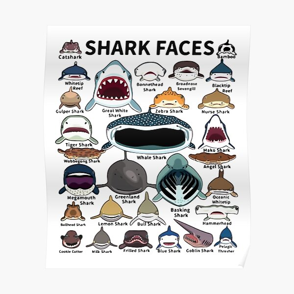 Shark Faces Poster
