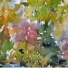 Green Lake shore in the rain by kest standley