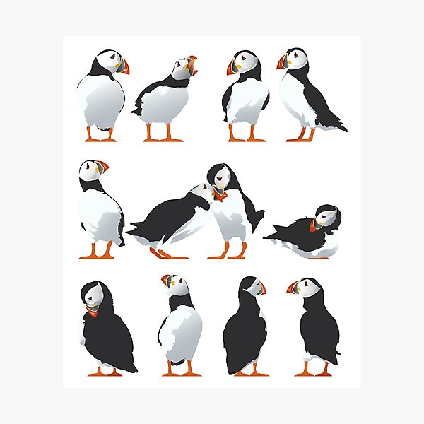 Puffin friends Photographic Print