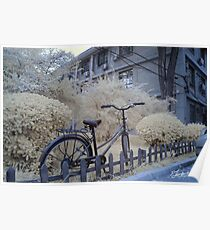Bicycle in Beijing Poster