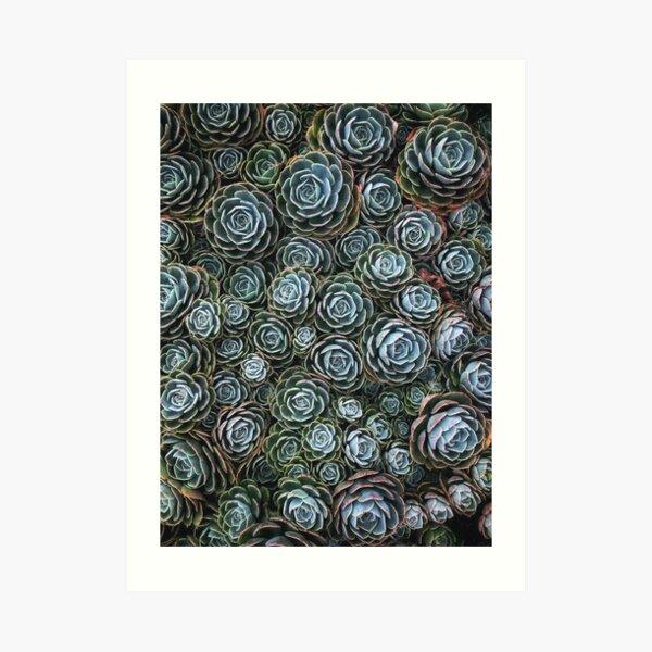 Succulent Society    Art Print