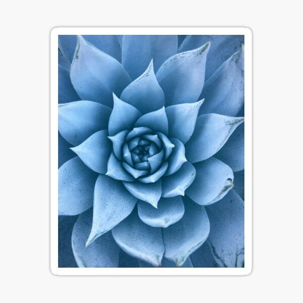 Cerulean Succulent  Sticker