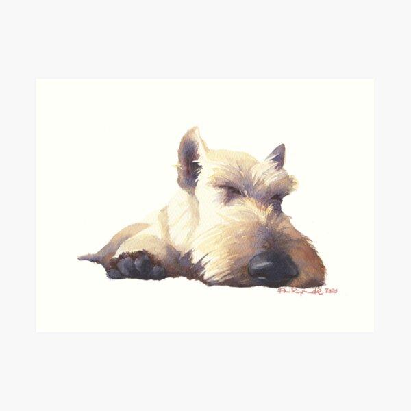 Leo Sleeps  Art Print