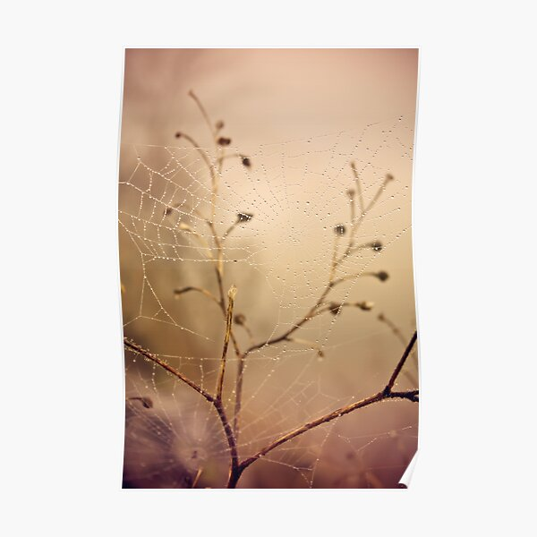 Autumn landscape, spider web in the field Poster