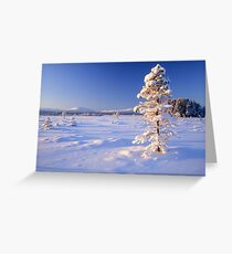 Snow covered trees in north Sweden Greeting Card