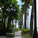 The Aruba Path by markellsmith