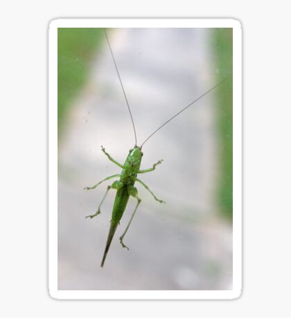 Katydid at the Window Sticker