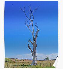 starling tree, Tasmania, Australia. Poster