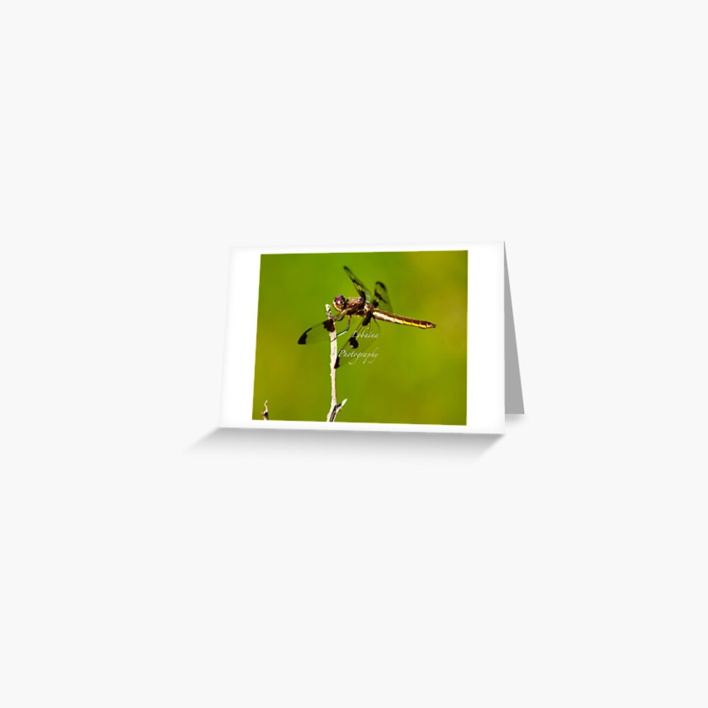 Dragonfly of the enchanted forest by Yannis Lobaina  Greeting Card