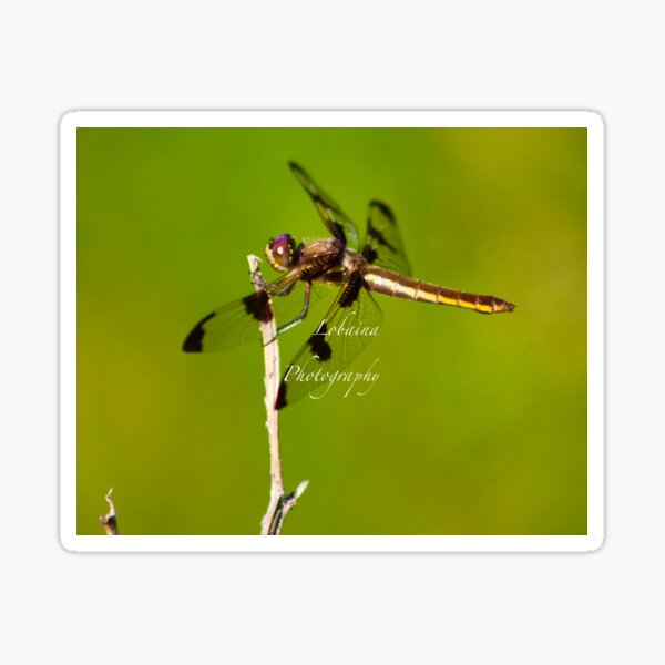 Dragonfly of the enchanted forest by Yannis Lobaina  Sticker