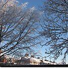 Winter Sunrise by BlueMoonRose