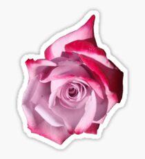 Rose of Pinks Sticker