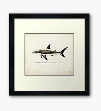 Carcharodon carcharias by Amber Marine, great white shark illustration, art © 2015 Framed Print