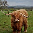 Highlander by Karen E Camilleri