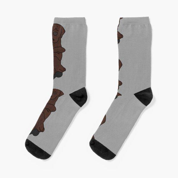 Labrador macht Männchen Socken