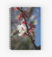 Sunlight Embracing Apricot Blossom Spiral Notebook