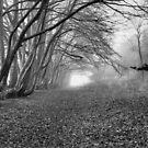 Autumn Morning by Francis Drake