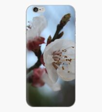 Close Up Apricot Blossom In Pastel Shades iPhone Case