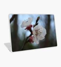 Close Up Apricot Blossom In Pastel Shades Laptop Skin
