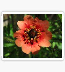 Orange Flower – Macro Close-Up Sticker