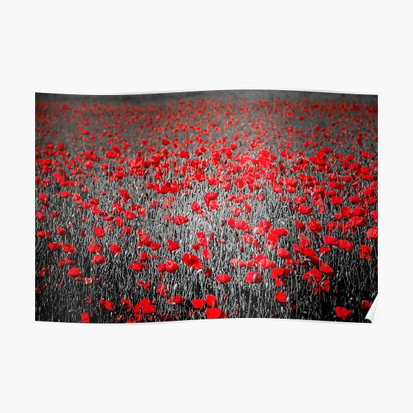 Poppy field and black and white background Poster