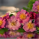 Theano Roses by Maria Draper