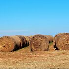 Round Bales Of Hay by Cynthia48