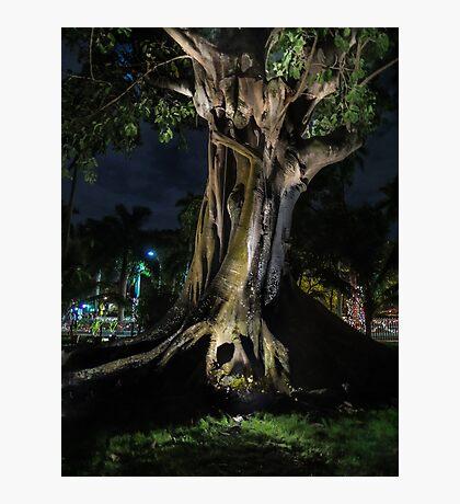 The Banyan Tree  Photographic Print