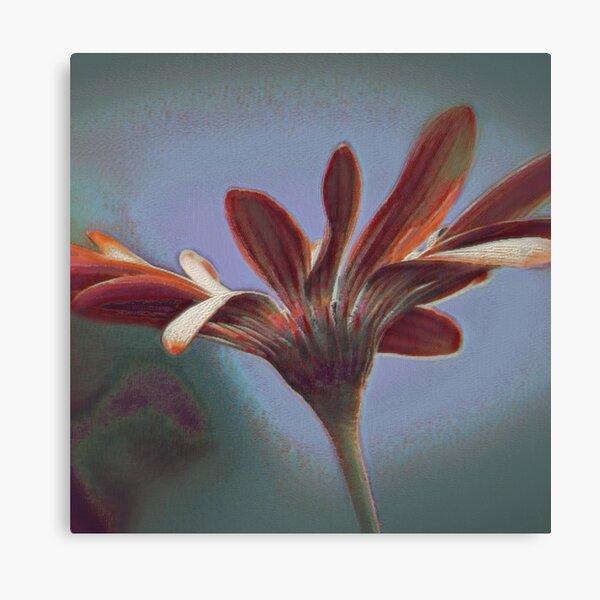 Flowering III Canvas Print