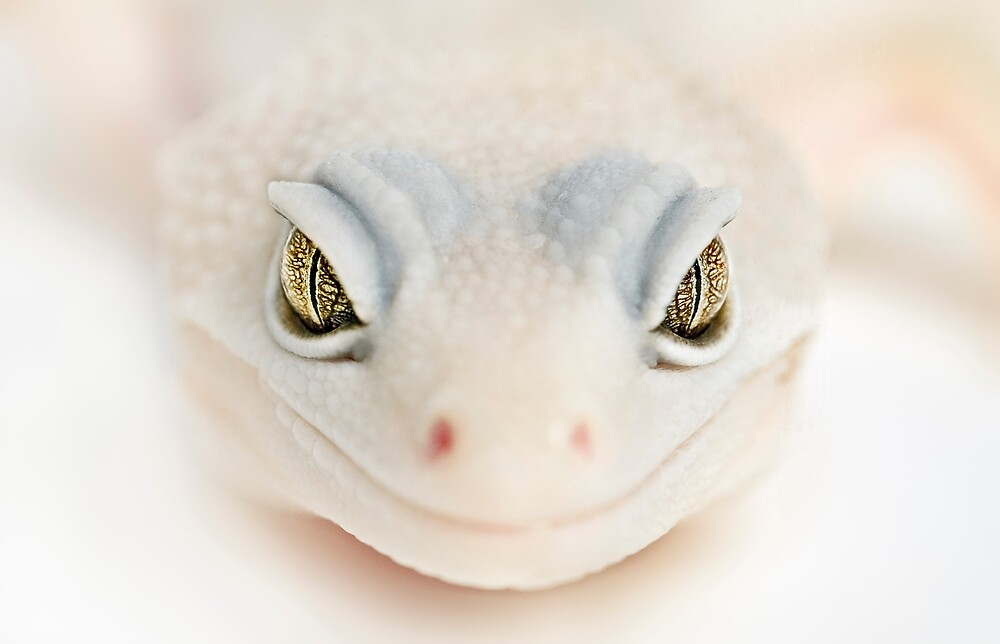 albino gecko welcome by Yves Rubin