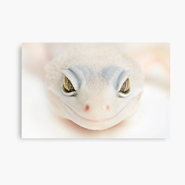 Albino gecko welcome Metal Print