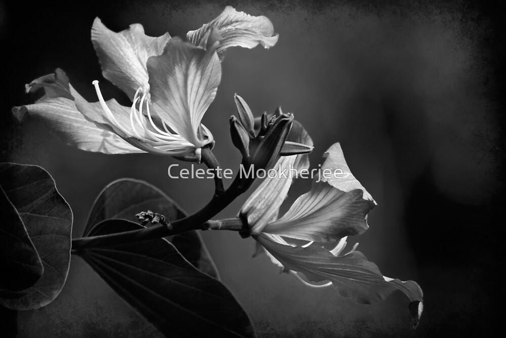 Pas de deux by Celeste Mookherjee