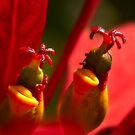 Strange alien world at the center of a poinsettia by Celeste Mookherjee