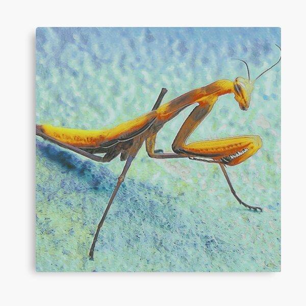 Praying Mantis I Canvas Print
