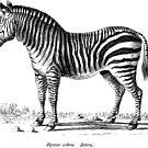 Zebra - Super Retro by cartoon