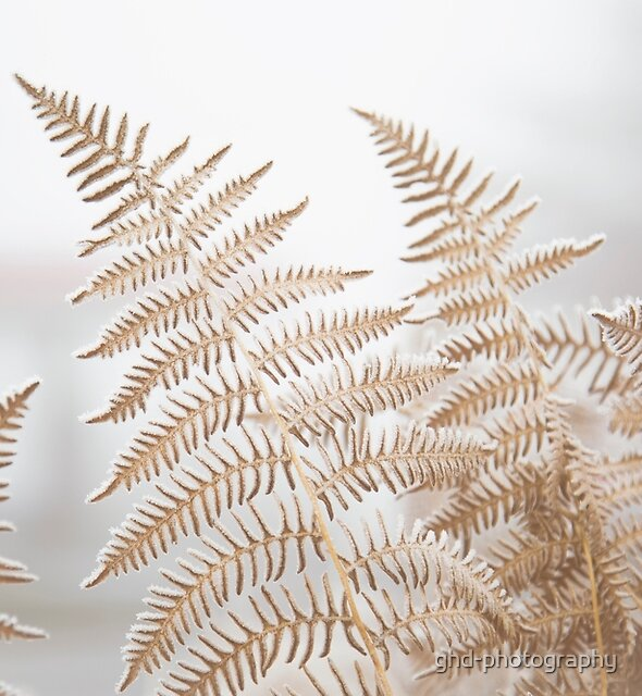 Frosted Fronds I by ghd-photography