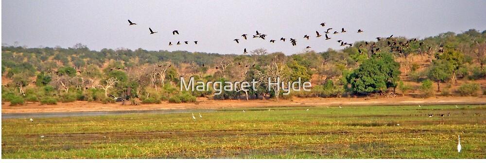 Flight of the birds, Chobe National Park, Botswana, Africa (panorama) by Margaret  Hyde