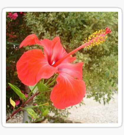 Beautiful Red Hibiscus Flower With Garden Background Sticker