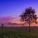 The Fog & the Tree by Beth  Wode