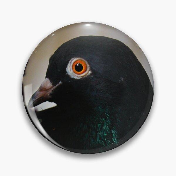 Black Pigeon, Orange eyes Pin