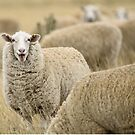 Smiling at ewe! by Candy Jubb