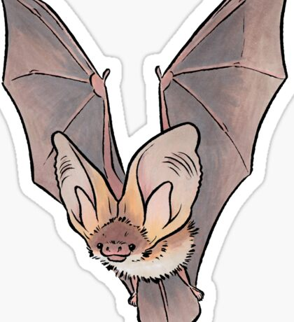 Grey long-eared bat Sticker