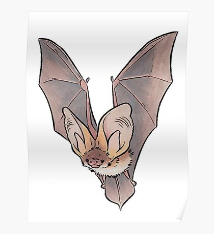 Grey long-eared bat Poster