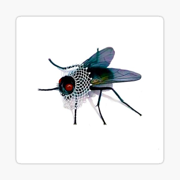 A Fortuitous Fly in a Lace Collar Sticker
