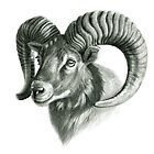 The Mouflon G125 by schukinart
