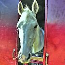 White Horse, artistic, red and blue by Wilfried van Dokkumburg