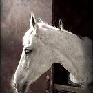 White Horse, portrait  by Wilfried van Dokkumburg