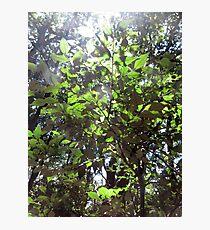Dappled Sunlight Through The Leaves Photographic Print